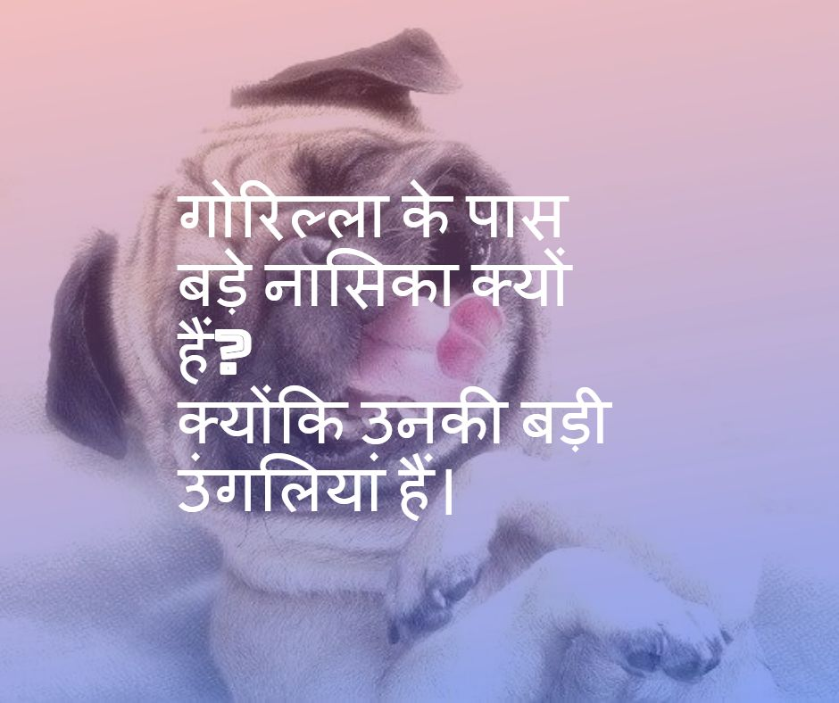 animal jokes in Hindi